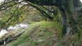 Beautiful beech trees along River Barle