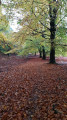 Beautiful beech trees in autumn along the path in Oakenhill Wood