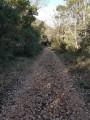 chemin assez caillouteux