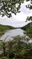 Ethy woods circular walk from Lerryn