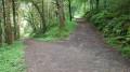 Walk around Deerpark Wood