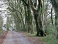 Funtle Lane