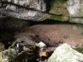 l'interieur de la grotte