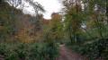 Path in Kingscote Wood