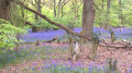 Spring is a Beautiful Time to Hike the Chilterns