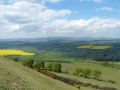 The Cheviots from Burgh Hill
