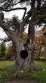 "The ""Harry Potter Tree"""