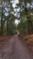 Track in Staple-edge Wood