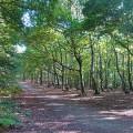 Trees, Newmiller Dam
